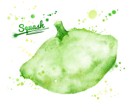 courgette: Hand drawn watercolor illustration of pattypan vegetable with paint splashes.
