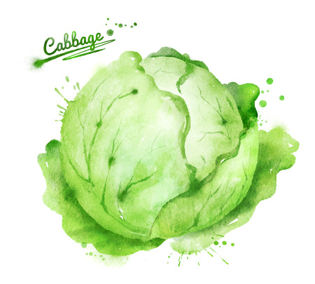 Hand drawn watercolor illustration of cabbage with paint splashes. Archivio Fotografico