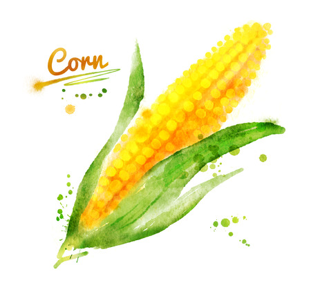 Hand drawn watercolor illustrations of corn with paint splashes. Stock Photo