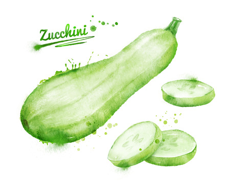 Hand drawn watercolor illustration of zucchini with paint splashes.