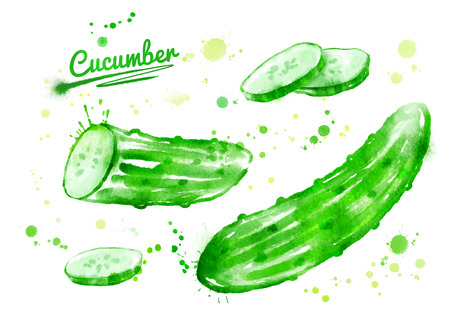 Watercolor hand drawn illustration of cucumbers with paint splashes. Whole, half and slices.
