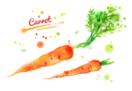 Hand drawn watercolor illustration of carrots with paint splashes.