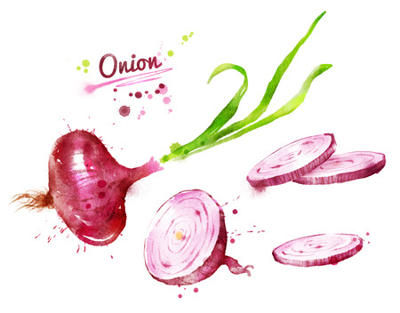 Hand drawn watercolor illustration of red onion with paint splashes.