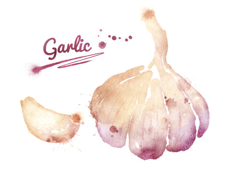Watercolor drawing of garlic with paint splashes.