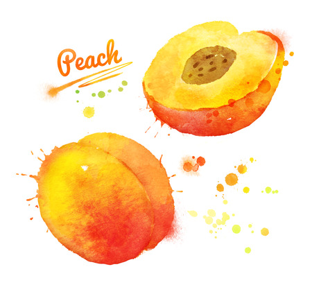 Hand drawn watercolor illustration of peach. Reklamní fotografie - 45262036