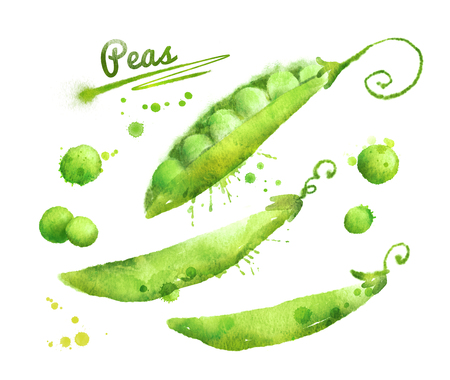 Hand drawn watercolor illustration of peas with paint splashes. Фото со стока