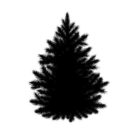 drawing trees: Vector illustration of fir tree silhouette isolated on white background