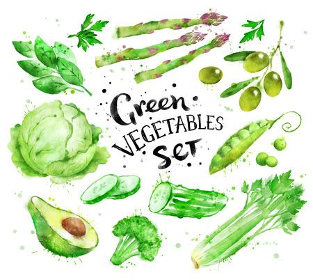 手描きペイント水しぶきと緑の野菜の芸術的な水彩セットです。