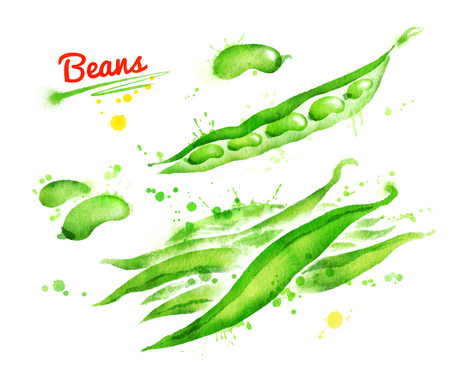 pulses: Watercolor illustration of french beans