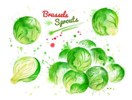 Watercolor illustration of brussels sprouts