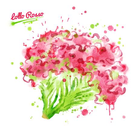 Watercolor illustration of lollo rosso salad