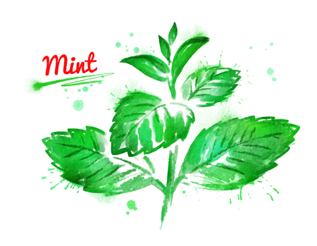 Watercolor illustration of mint branch