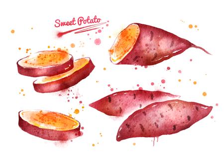 Watercolor illustration of sweet potato 스톡 콘텐츠