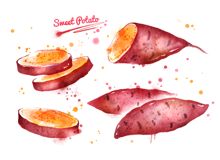 Watercolor illustration of sweet potato Foto de archivo