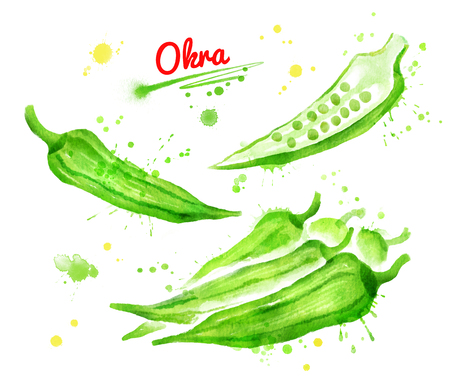 Watercolor of illustrations of okra Stock Photo