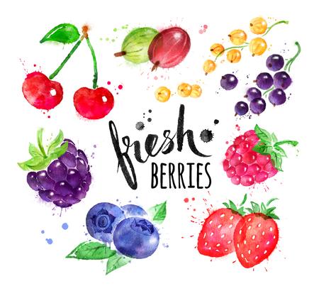 手描きの果実の水彩セット 写真素材