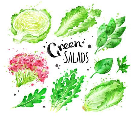 水彩セット グリーン サラダ