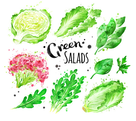 녹색 샐러드의 수채화 세트
