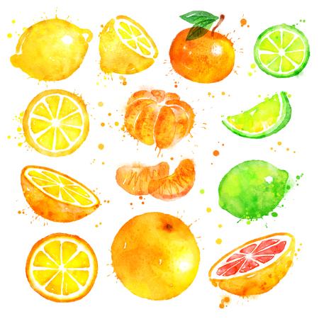 柑橘系の果物の水彩イラスト セット