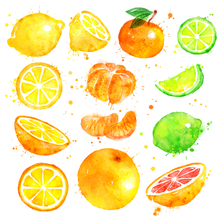 Watercolor illustration set of citrus fruit