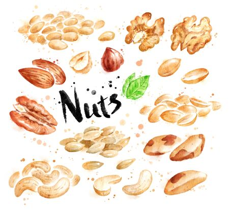 Watercolor set of peeled nuts