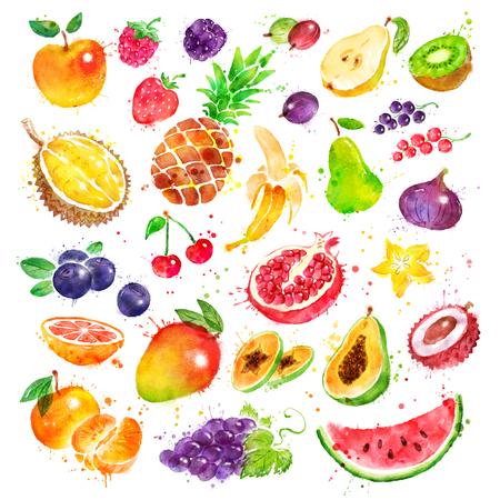 손으로 그린 수채화 세트 과일