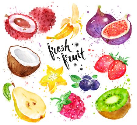 Watercolor illustration set of fruit Stock Photo