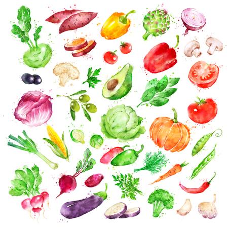 Watercolor illustration set of vegetables Imagens