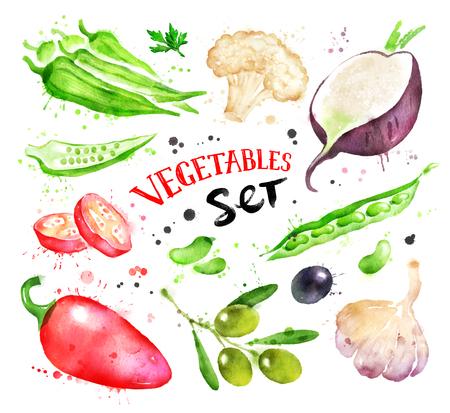 green bean: Watercolor illustration set of vegetables Stock Photo