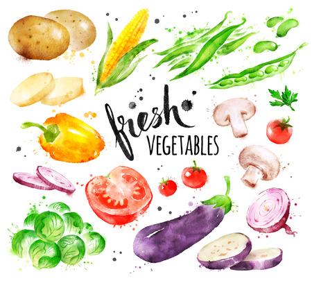 Watercolor illustration set of fresh vegetables