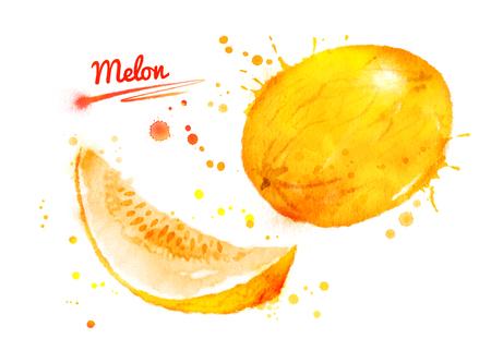 メロンの水彩イラスト