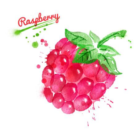 Watercolor illustration of raspberry Stock Photo
