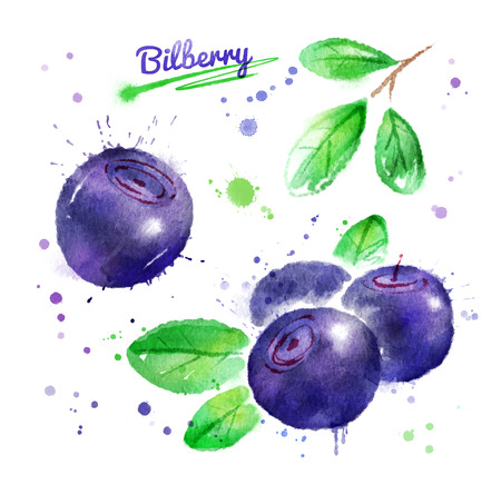 Watercolor illustration of bilberry with leaves and paint smudges and splashes.