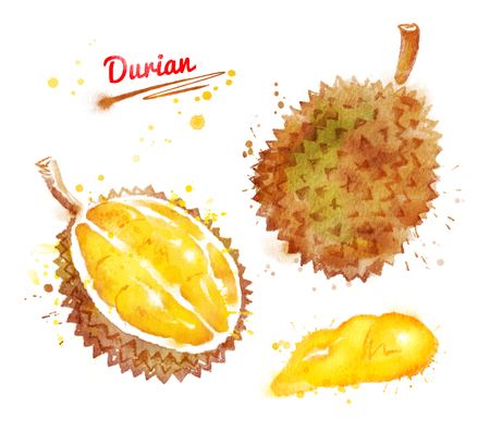 Watercolor illustration of durian, whole and half, with paint smudges and splashes.