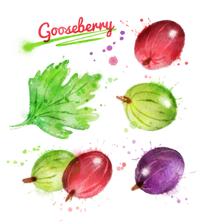 Watercolor illustration of gooseberry and leaf with paint smudges and splashes. Stock Photo