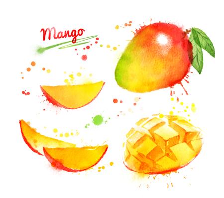 Watercolor illustration of mango, whole and sliced with leaf and paint smudges and splashes.