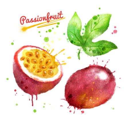 Waterverfillustratie van passionfruit geheel en de helft met verf smudges en plonsen.