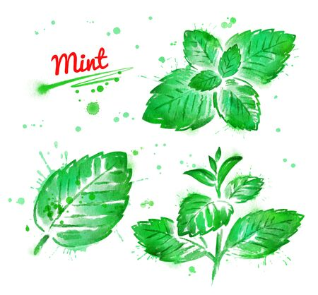 Watercolor collection of mint branch and leaves with paint smudges and splashes.