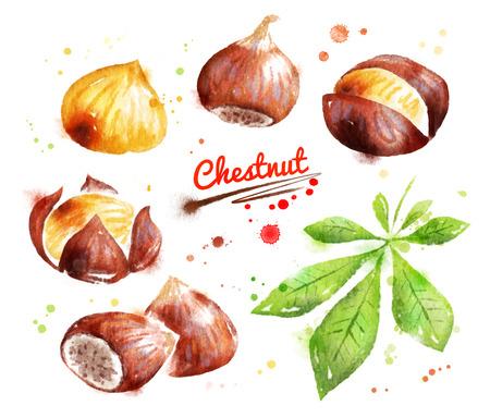 Watercolor illustration of chestnut Foto de archivo