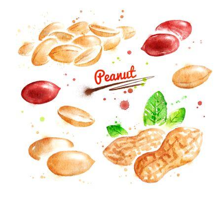 Watercolor illustration of peanut Stock Photo