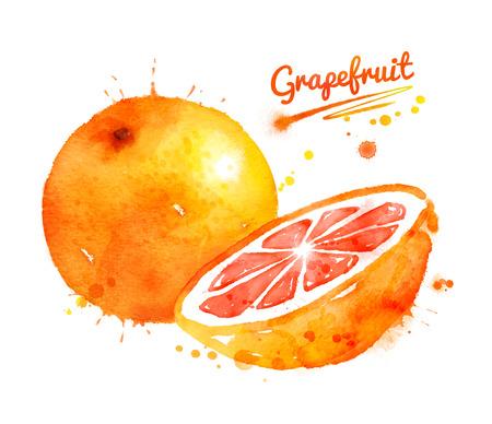 Waterverfillustratie van grapefruit Stockfoto