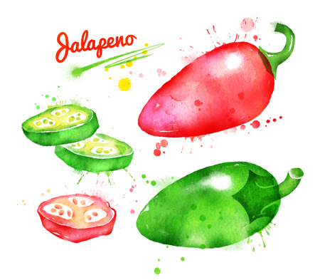 cayenne: Watercolor illustration of jalapeno pepper