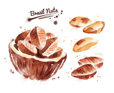 Watercolor illustration of brazil nut Stock Photo