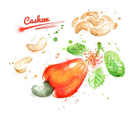 albero nocciolo: Illustrazione di acquerello di anacardi