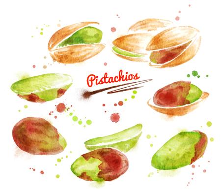 pistachios: Watercolor illustration of pistachios nuts