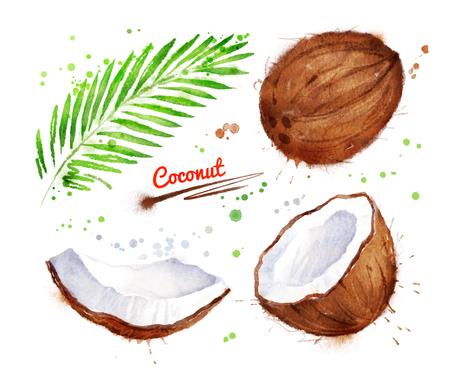 Watercolor illustration of coconut Stock Photo