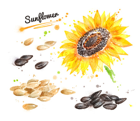 Watercolor sunflower and pile of seeds Stock Photo