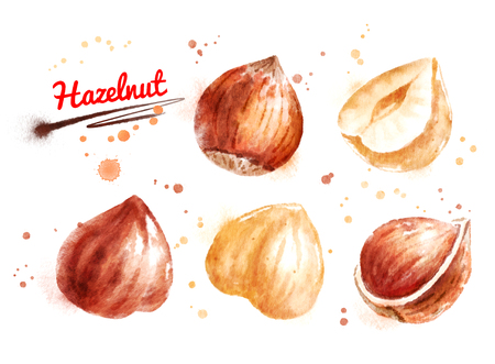 Watercolor illustration of hazelnut