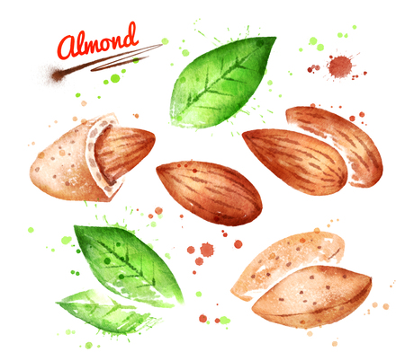 Watercolor illustrations of almond nut