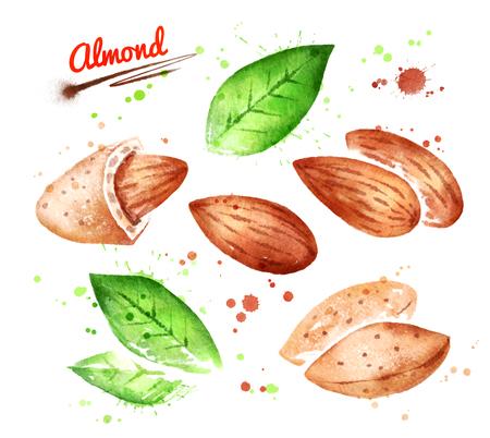 Watercolor illustrations of almond nut Stock Illustration - 83288478